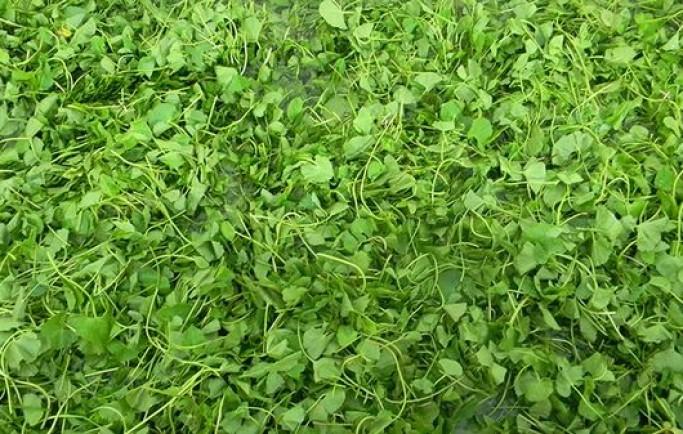 Địa chỉ chuyên bán bột rau má chất lượng số 1 thành phố Hồ Chí Minh