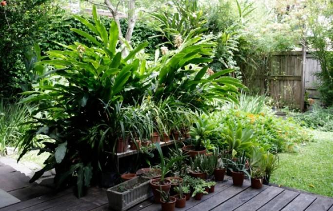 Đổi mới nhà giúp hòa nhập với thiên nhiên tươi đẹp