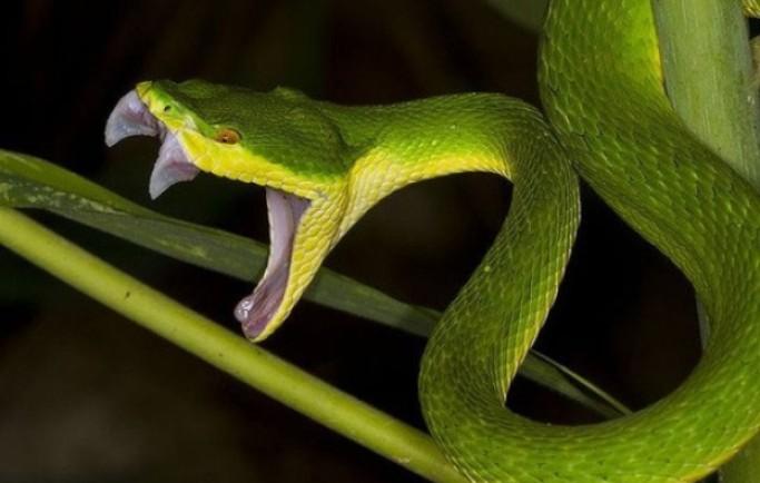 Mộng mơ thấy rắn đuổi điềm lành hay dữ