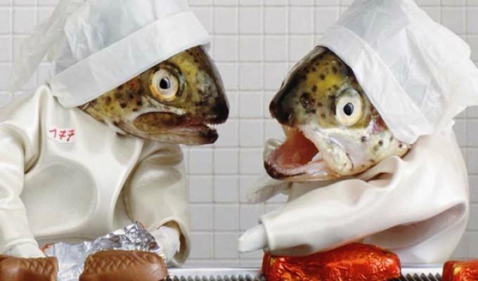 Nằm mộng thấy con cá nên đánh xổ số con gì