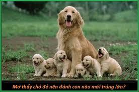 Bí ẩn giấc mơ thấy chó nhận định từ các chuyên gia xổ số miền bắc