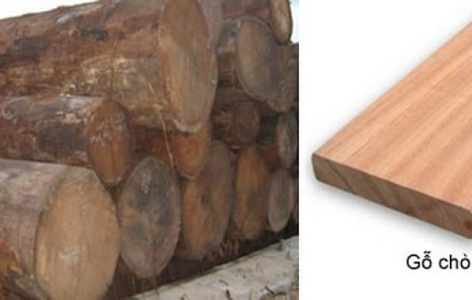 Ưu điểm của gỗ chò chỉ trong làm đồ nội thất